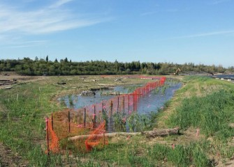 A re-created wetland continues to grow in through fall. Ten acres of new wetlands are being built along the lake's western shoreline.