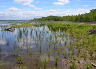 One hundred native freshwater marsh, grassland, and woodland plant species are being installed to support aquatic habitat for amphibians, reptiles, and birds.
