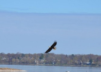 Onondaga Lake is showing remarkable signs of recovery. A mature Bald Eagle is seen flying near the western shoreline of the lake.