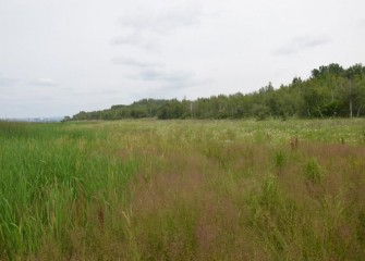 A variety of native species are also flourishing in wet meadow areas on the Western Shoreline.
