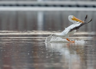 """El Nino Water Skiing"" Photo by Greg Craybas"
