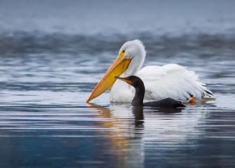 """White Bird, Black Bird; Big Bird, Little Bird ""Photo by John Savage"
