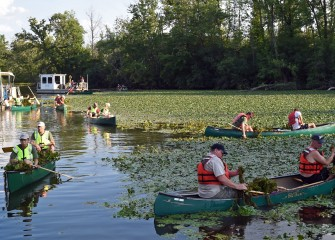 Past Klein Island participants find an area filled with a thick mat of water chestnut plants.