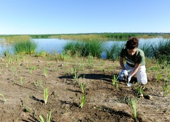Lydia Giordano, a student at Onondaga Community College, plants broadleaf cattail along Onondaga Lake's western shoreline. New plantings are given proper spacing to thrive and will eventually fill in bare areas.