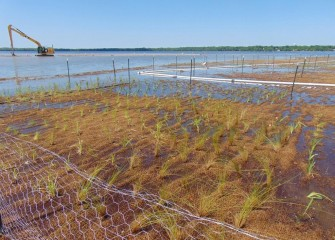 Fences and nets protect young plants from wildlife until the plantings are established.