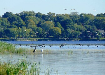 The new in-lake wetlands provide additional habitat for waterfowl and support Onondaga Lake's status as an Audubon Important Bird Area.