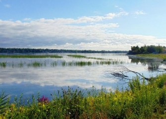 Plantings continue to grow. More than 18 acres of the lake at the mouth of Nine Mile Creek are being transformed into wetland habitat.