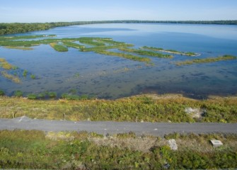 New Onondaga Lake wetlands near the mouth of Nine Mile Creek are now planted with 150,000 native plants.