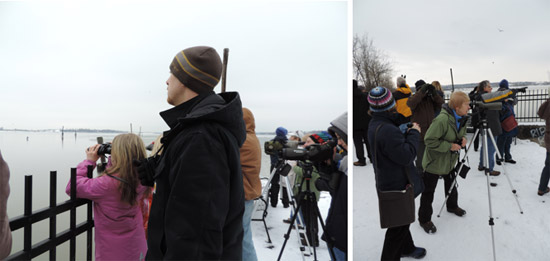Left: Sammie and Mark Bremer, of Manlius, New York, use binoculars to spot birds. Several Bald Eagles were spotted along the shoreline. Right: Sue Fillinger, of Pompey, New York, uses a scope to identify a Great Black-backed Gull.
