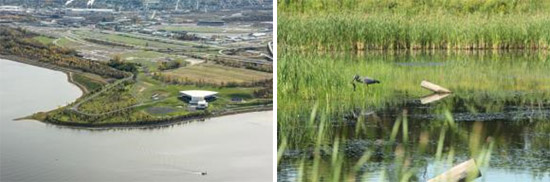 Left: Wetlands along Onondaga Lake's western shoreline have been restored. In 2015, Onondaga County opened the Lakeview Amphitheater, an outdoor concert venue located on the shore of Onondaga Lake.  Right: A Great Blue Heron catches a fish in the restored Geddes Brook wetlands.