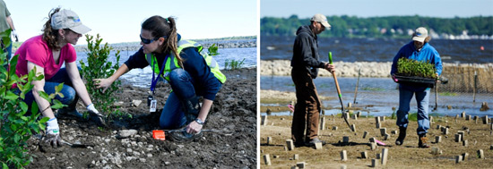 Left: First-time Corps volunteer Ali Fasano (left), of Liverpool, New York, learns about planting wetland species from Parsons Environmental Engineer Natalia Cagide-Elmer. Right: Alex and Angela Thor, of Syracuse, install wetland plants.