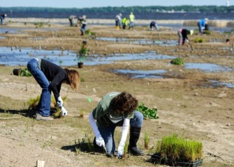 Volunteers install approximately 700 herbaceous plants and 240 native trees and shrubs along the southwest shoreline of Onondaga Lake on a Saturday morning.