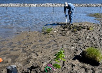 Between the shoreline and a berm, an area in the water is fenced off to protect young wetland plants to be installed over the next few weeks.