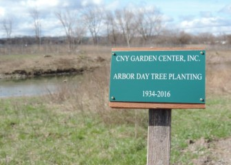 The Garden Center Association planted the sycamore tree in honor of Arbor Day, and to commemorate 82 years of civic service promoting horticultural activities and beautifying areas in and around Syracuse.