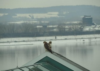 During the talk, a pair of Red-tailed Hawks appears on a roof peak outside the meeting room. Onondaga Lake is in the background.
