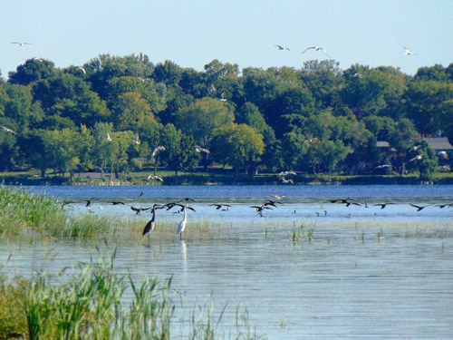 Several bird species utilizing newly restored wetlands along Onondaga Lake's western shoreline.