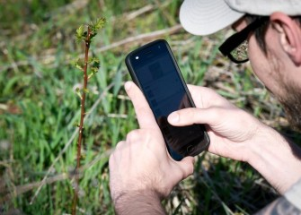 Citizen science volunteers use iNaturalist, a nature app, to record species.
