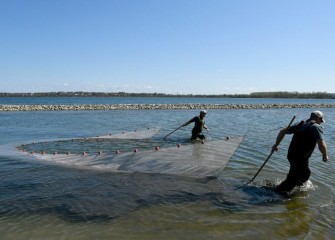 Two habitat experts use a seine net, moving parallel to the southwest shoreline, to capture fish and other creatures for identification.