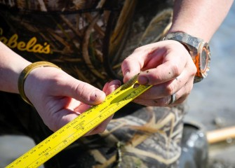 A juvenile sunfish is measured before being returned to the lake.