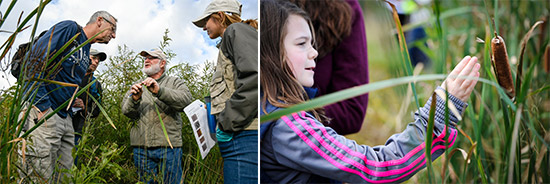 Left: Botanist Joe McMullen (center) shows Joe and Jan Hansen (left), of Liverpool, and YNLT member Kate Abbott (right) characteristics of plants found in wetlands along the southwest shoreline of Onondaga Lake. Young trees seen in the wetlands included swamp white oak, sycamore, and red maple.  Right: Autumn Keefe, of Syracuse, observes a cattail seed pod during a scavenger hunt to inventory plant species.