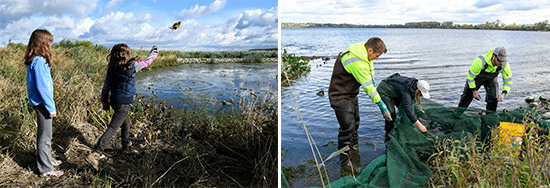 Left: Sisters Evie (left) and Autumn Keefe, of Syracuse, take turns tossing burlap seed bags containing pickerelweed seeds into the wetlands.  Right: YNLT member Candace Schermerhorn (center) removes fish from a seine net for closer observation with Matt McDonough (left) and Jim Molloy, of Parsons. Species found included banded killifish, emerald shiner, and rock bass.