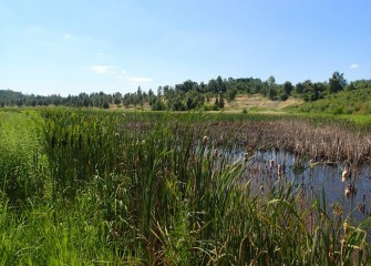 Inland wetlands created along the Western Shoreline provide suitable habitat near the lake for amphibians, reptiles and small mammals.
