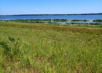 Native vegetation continues to become established along the Western Shoreline.