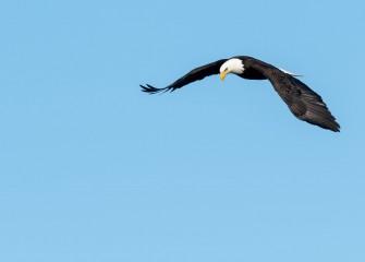 """Aerial Surveillance""Photo by Gregory A. Craybas"