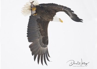"""""""Up and Away""""Photo by Diana Whiting"""