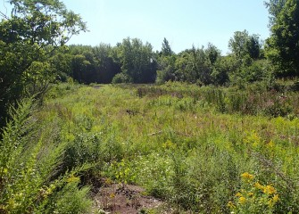 Native species are helping restore habitat at Harbor Brook that was once dominated by invasive species.