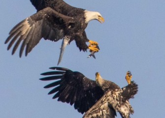 """""""The Steal, Eyes on the Prize""""Photo by Joseph Karpinski"""