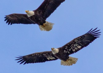 """""""Come Fly With Me""""Photo by Joseph Karpinski"""