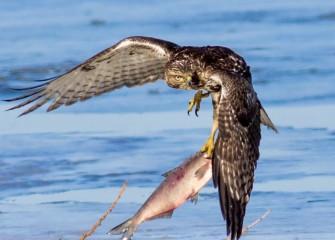 """Fly Fishing""Photo by Joseph Karpinski"