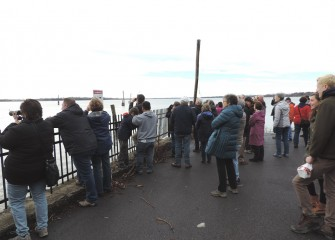 Participants were able to see a Bald Eagle and many migrating waterfowl on the lake after the recent ice thaw.