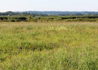 Honeywell worked with Audubon to create a native grassland habitat at the consolidation area as part of Audubon New York's Grassland Bird Conservation Program.