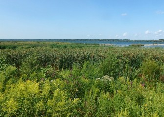 Fourteen acres of wetlands and four acres of shoreline habitat were completed at the Southwest Lakeshore in 2017 as part of the Onondaga Lake Habitat Restoration Plan.