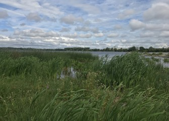Implementation of the Onondaga Lake Habitat Restoration Plan was completed in 2017.