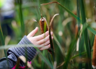 Autumn Keefe observes the texture and other characteristics of a cattail seed pod during the scavenger hunt.